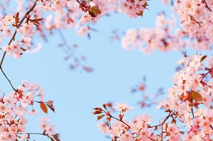 Spring in Japanes