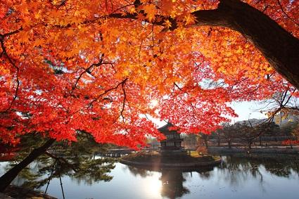 Fall in Korean